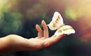 Человеческая душа как бабочка. Стоит неосторожно к ней прикоснуться, и ты ранишь ее навсегда…