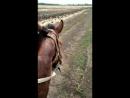 Поход на лошадях
