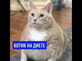Котик на диете