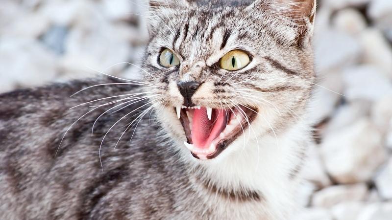 Кошка с обязаностями боевой псины