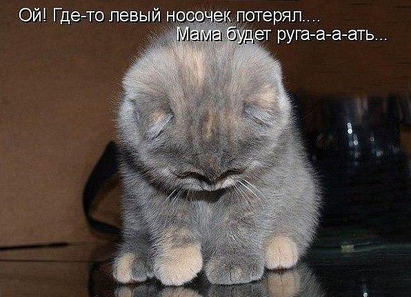 Прикольные фото кошек Прикольные кошки коты и котята 83