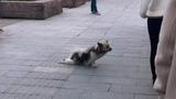 Give this dog an Oscar