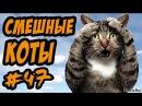 Видео Приколы с Котами ДО СЛЁЗ Смешные коты и кошки 2017