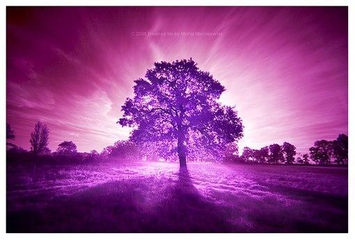 Коронная чакра (Сахасрара)   - Всемогущие