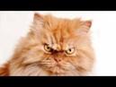 Кот ударил в глаз и показал тот свет