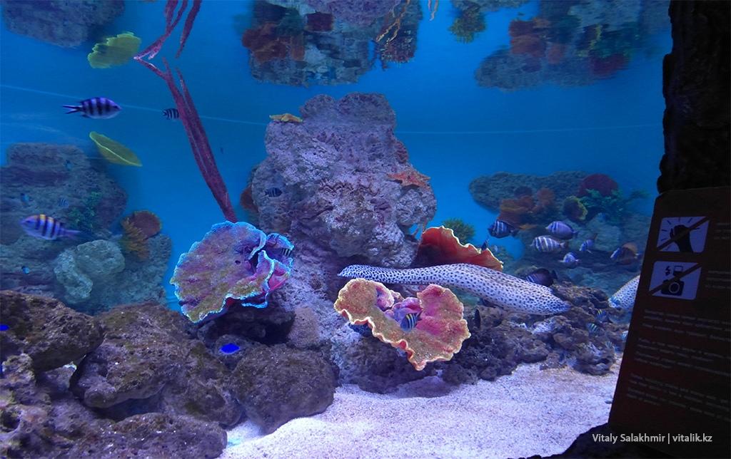 Угорь в аквариуме зоопарка Алматы
