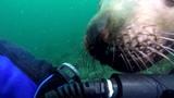 Scuba Diving Alaska #coub