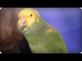 Эхо говорящая птица Папугай 2013 - Americas Got Talent  Audition