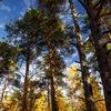"""Погружение """"Слово для леса и мира одно"""""""
