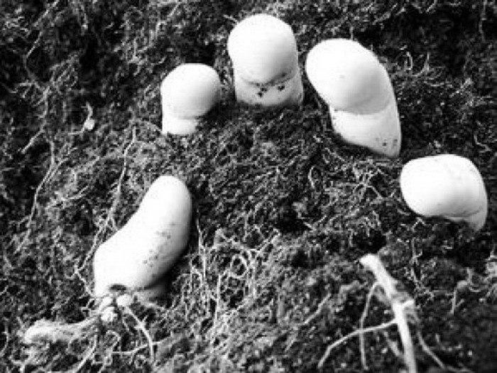 Липачнин зарубил таганрожца и закопал его тело в лесу