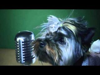 Приколы с животными   песня о приколах с животными