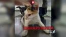 Живодеры расстреляли котенка