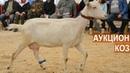 Аукцион коз. Вторая Всероссийская выставка молочного козоводства.