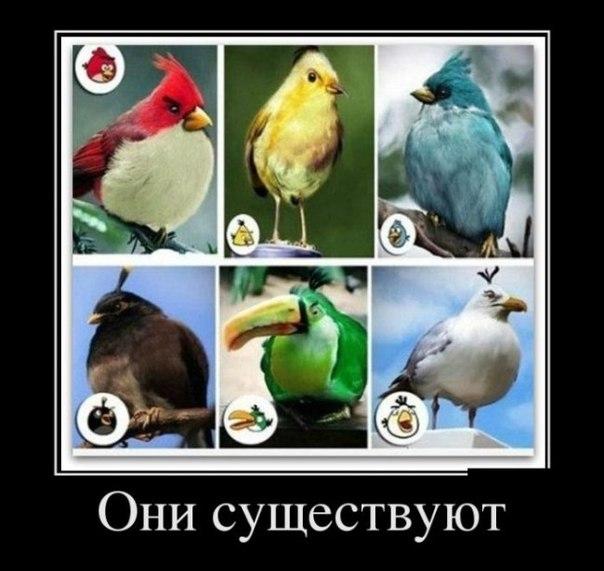 angry birds 2 скачать на пк
