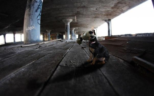 собака в противогазе
