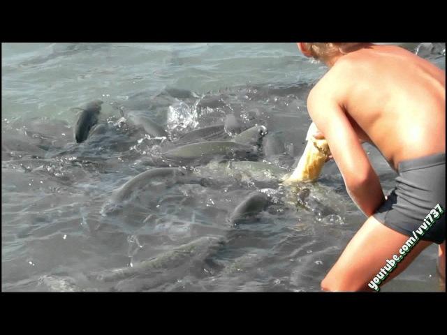 рыбалка в ницце на море