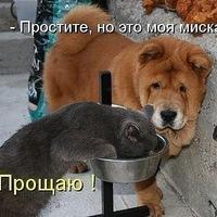 Дарья Яранцева, 8 ноября , Шарья, id174826813