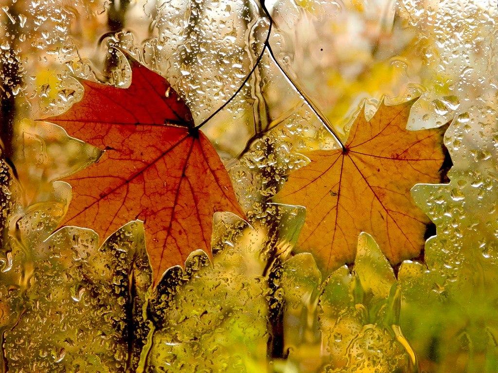Фото золотой дощ 25 фотография