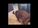 Собака Танцевака 😂