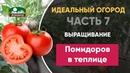 Выращивание помидоров томатов в теплице - Идеальный огород. Часть 7