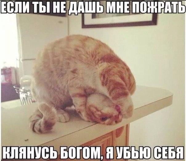 http://cs608820.vk.me/v608820600/cf46/7hP1LR42Hhc.jpg