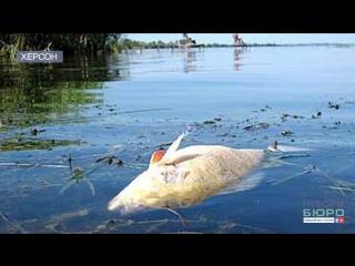 У Каховському водосховищі стався масовий замор риби