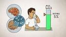 Углекислый газ (СО2) жизненно важен для усвоения кислорода! Почему!? Самоздрав. или метод Бутейко?