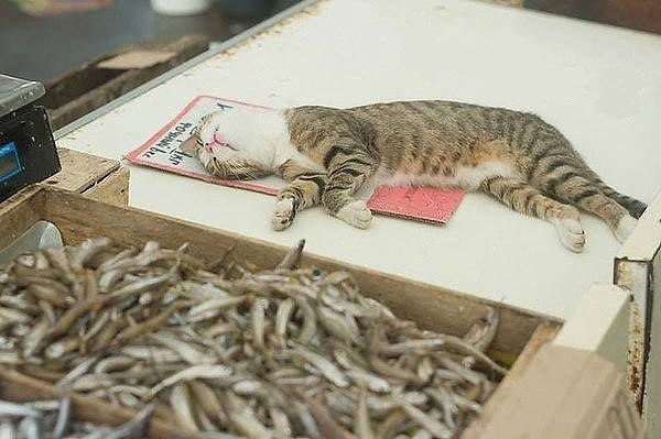 — Неля Моисеевна!..Заберите своего кота!!!... Он опять у рыбного отдела голодный...