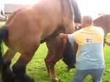 LOL || Спаривание лошадей || Mating horses ||