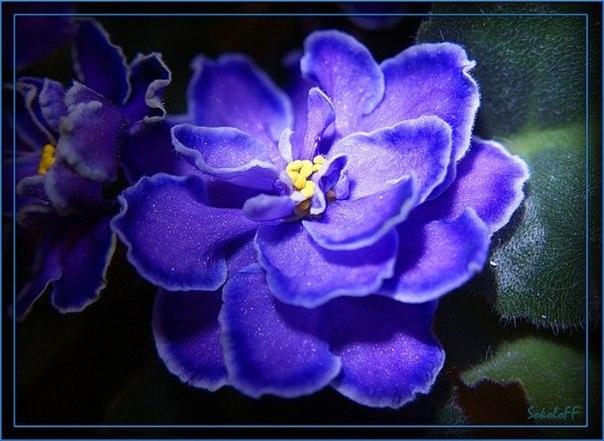 Никогда не надо слушать, что говорят цветы. Надо просто смотреть на них и дышать их ароматом...