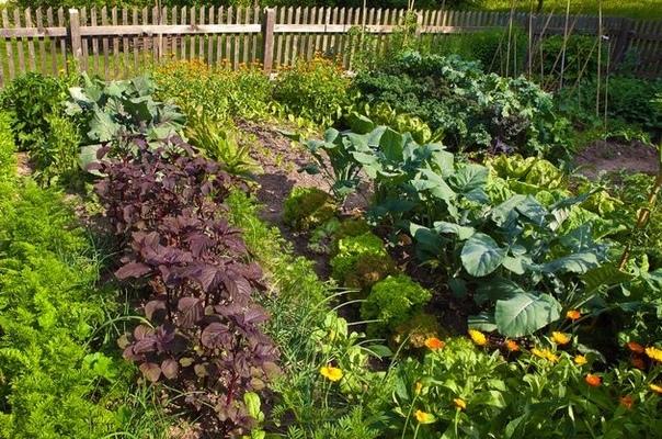 Удачное соседство  хороший урожай