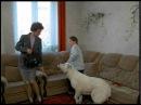 Ералаш №167 Осторожно, злая собака