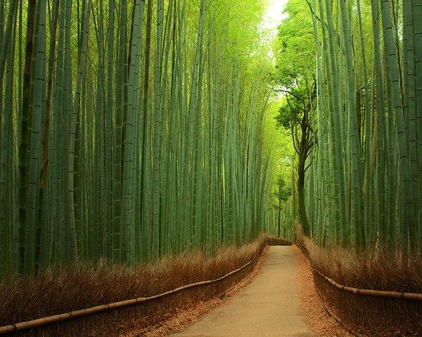 Бамбуквый путь, Киото, Япония