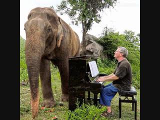 Музыка для слонов