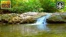 Шум Реки и Пение Лесных Птиц. Звуки Природы: Водопад Для Сна и Релаксации 8 Часов.