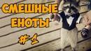 Смешные Еноты ДО СЛЁЗ Приколы С Енотами 2018