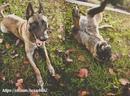 Кто испытал привязанность к верной и умной собаке, тому нет нужды объяснять…