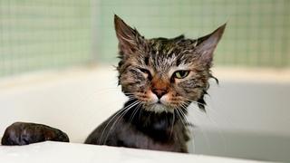 Приколы с котами ) Смешные коты и кошки