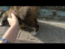 Самая ласковая представительница породы кошачьих которую я только встречала Хозяева переехали и бросили Алиску Поможем найти