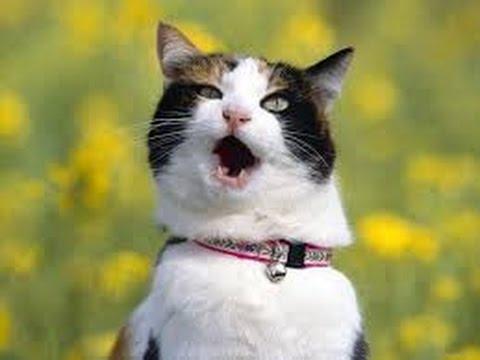 кот не привык к ошейнику
