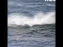 Дельфин-засранец