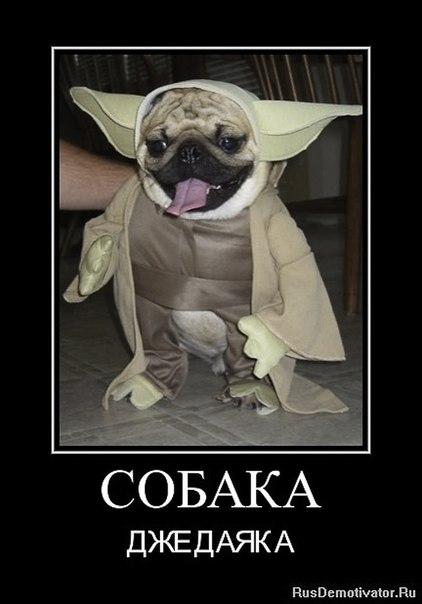 Собака-джедаяка