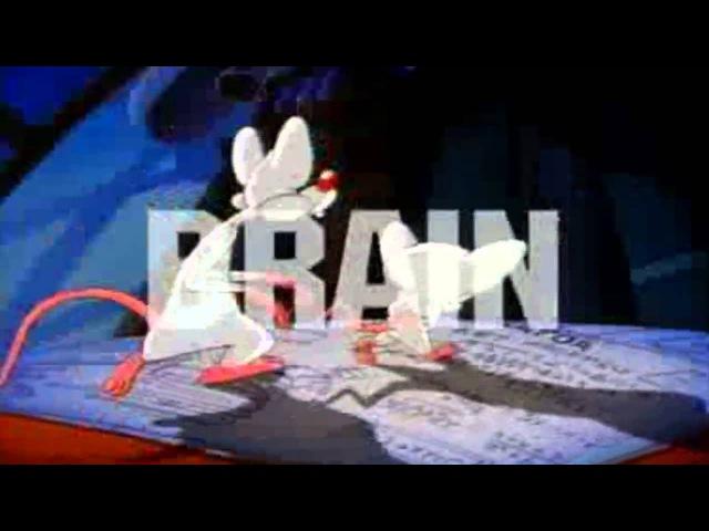 Пинки и Брейн Pinky and the Brain Заставка Заставки Intro Intros Opening Openings