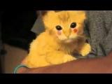 РЖАКА !!! Котёнок Пикачу