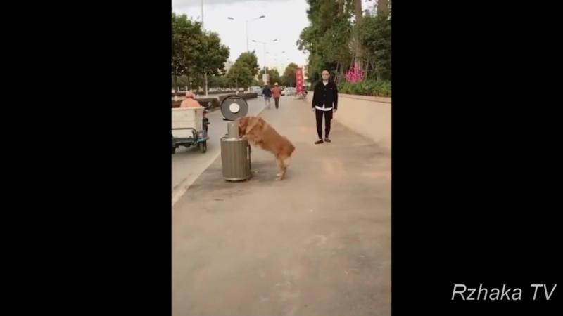 Собака чистюля Не кидайте мусор