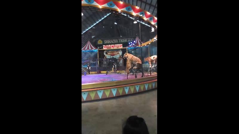 🐅 лучшее Тигровый зоопарк ,минут 30 от Паттаей ( шоу тигров )номер 1:шоу тигров в Тайланде паттайя паттаия тайланд таиланд