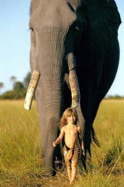 Современная Маугли. Типпи Дегре родилась в Африке в семье французских фотографов дикой природы и провела свое детство крайне необычно. Девочка выросла в африканской пустыне, установив необычайно близкие отношения со многими дикими животными, включая 28-летнего африканского слона по имени Абу, леопарда J&B, детенышей льва, жирафов, страуса, мангуста, гепарда, жеребенка зебры, крокодилов, огромных жаб и даже змею. Африка была ее домом в течение многих лет, позволив Типпи подружиться с…