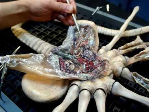 Alien Facehugger Autopsy Life Size Wall Hanger