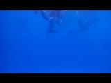 Асия Салихьянова_Плавание с дельфинами