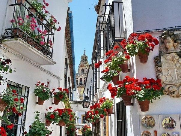 Цветы на стенах домов в